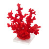 escultura-de-coral em-resina-vermelha-e-base-em-acrilico-22x23x10cm